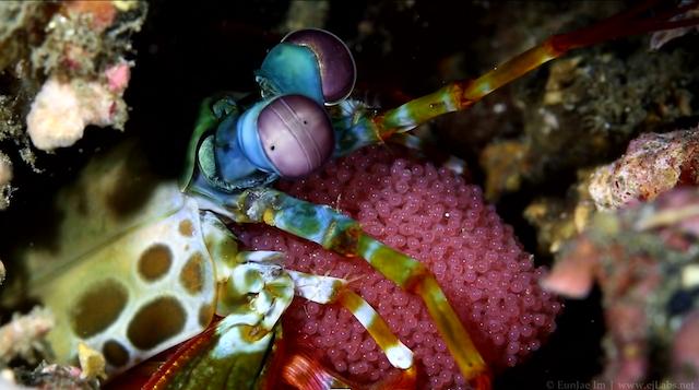 Underwater_Photography001