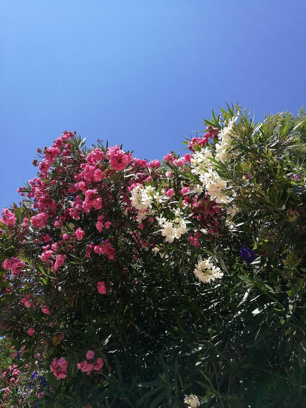 Die Algarve Einsame Strände und ein Traum für Surfer (2)